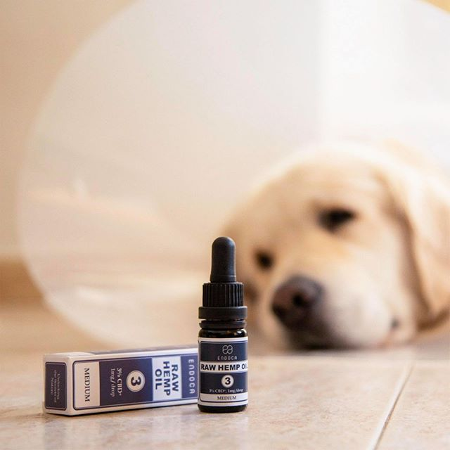 CBD and Dogs Tips on Dosage & More