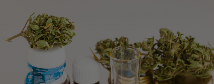 CBD Oil VS Copaiba Oil Everything You Need to Know